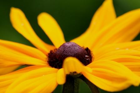 coeur-de-fleur.jpg