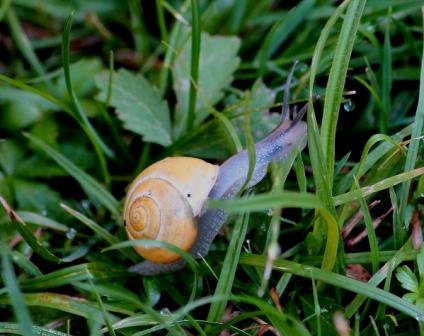escargot-modif.jpg