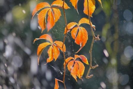 feuillage-d-automne.jpg