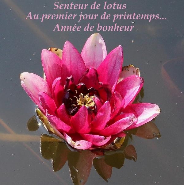Senteur de lotus